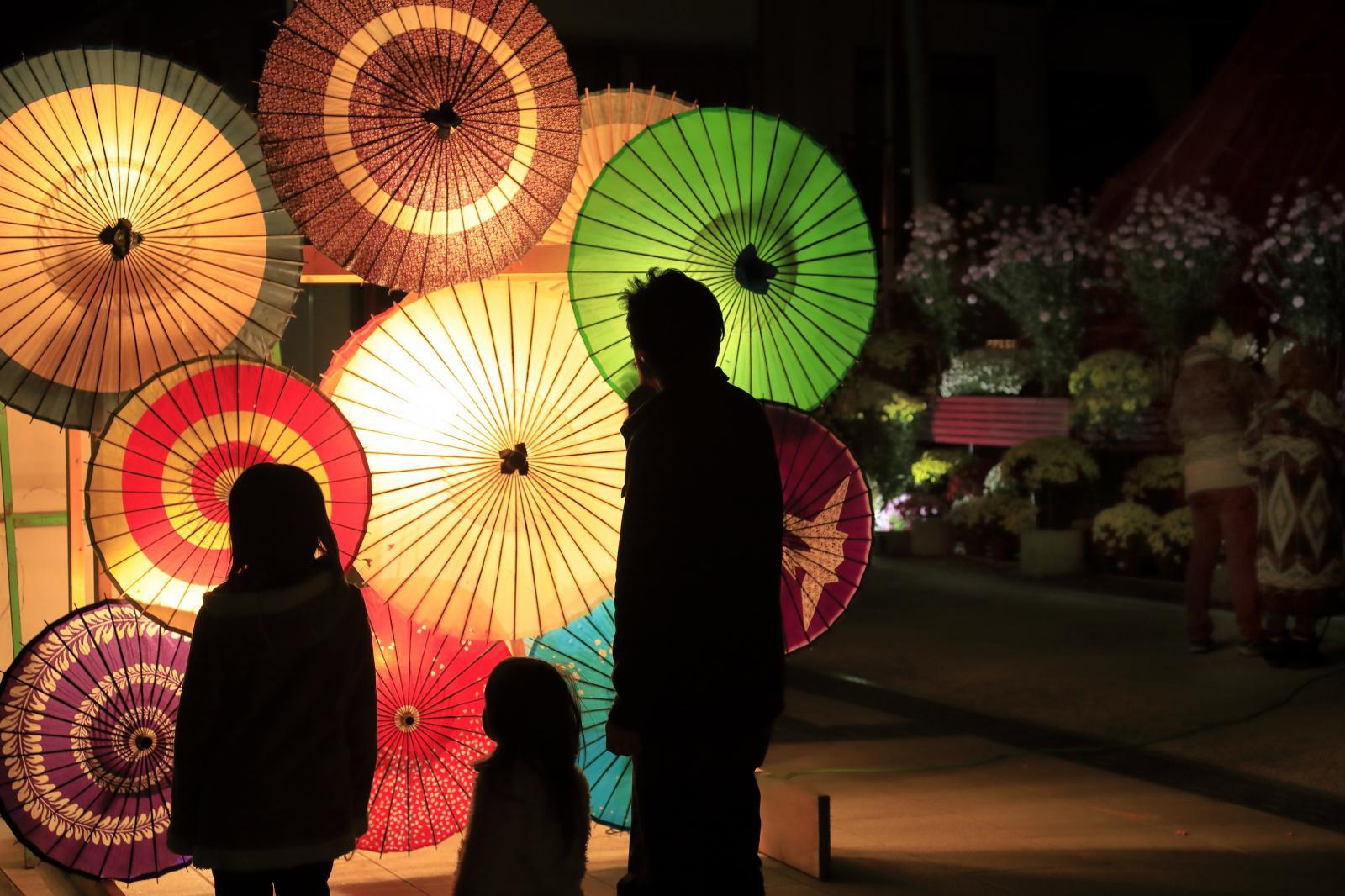 菊まつり傘